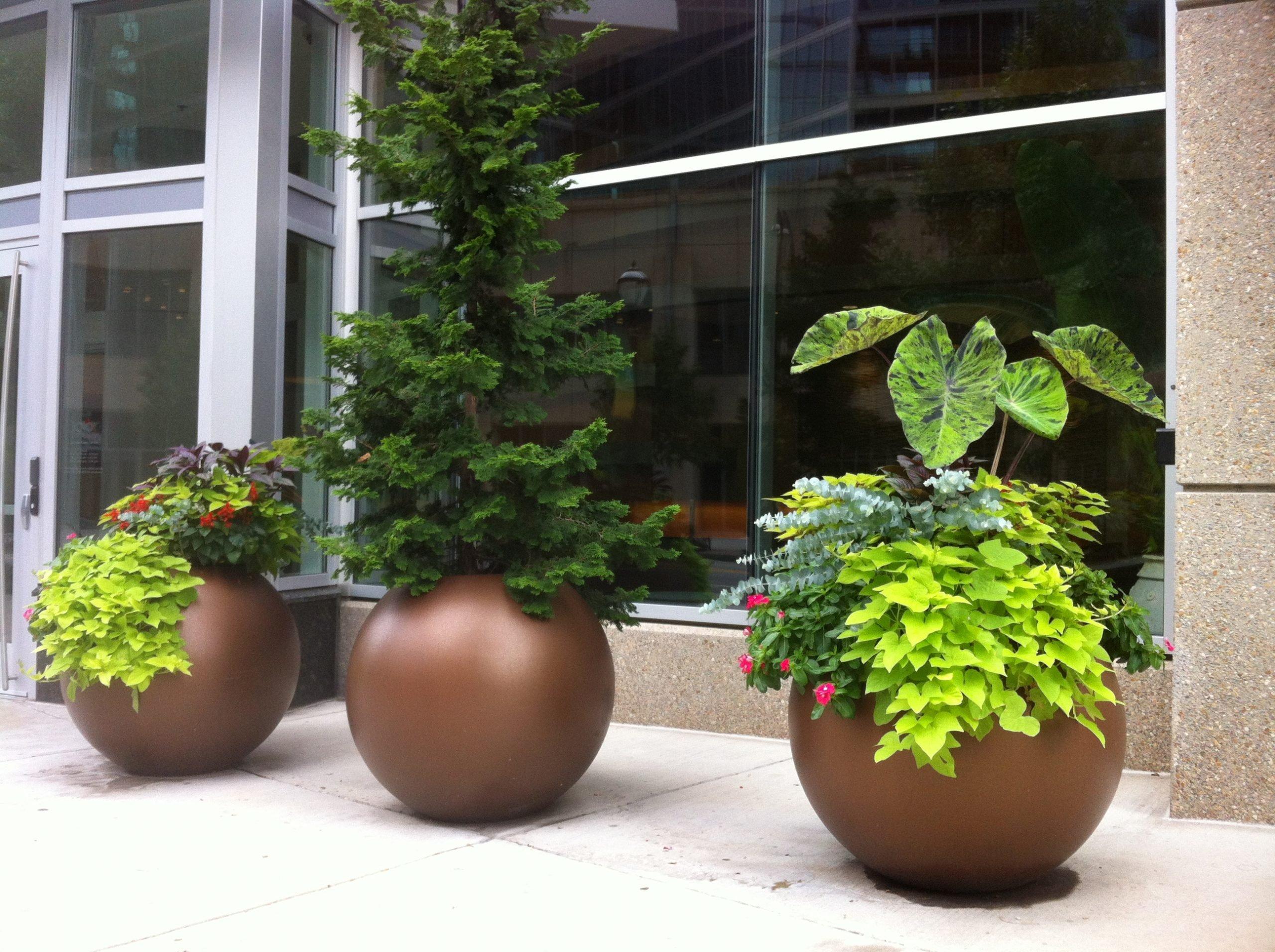 3 golden brown globular planters outdoors