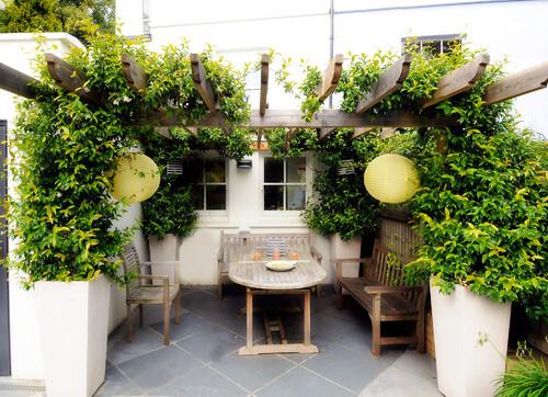 Planter for vines