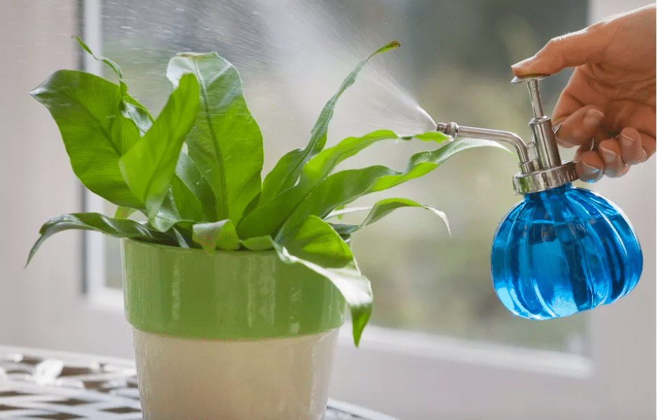 Master the art of watering your plants