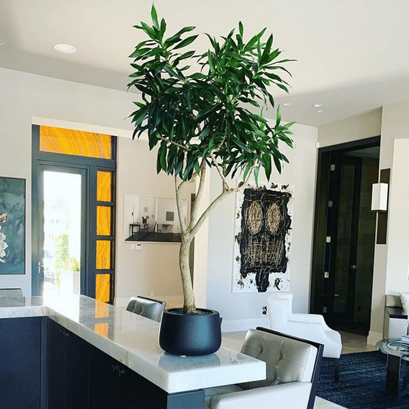 Planter In Modern Home