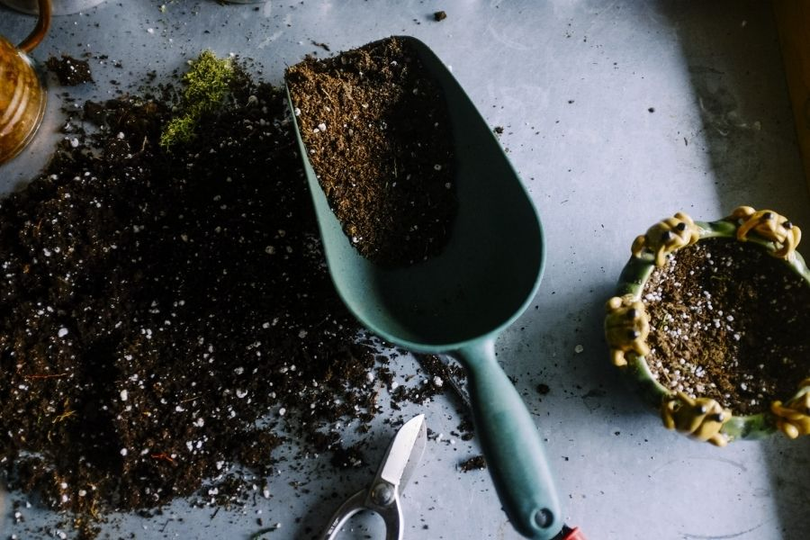 how to grow plants in pots