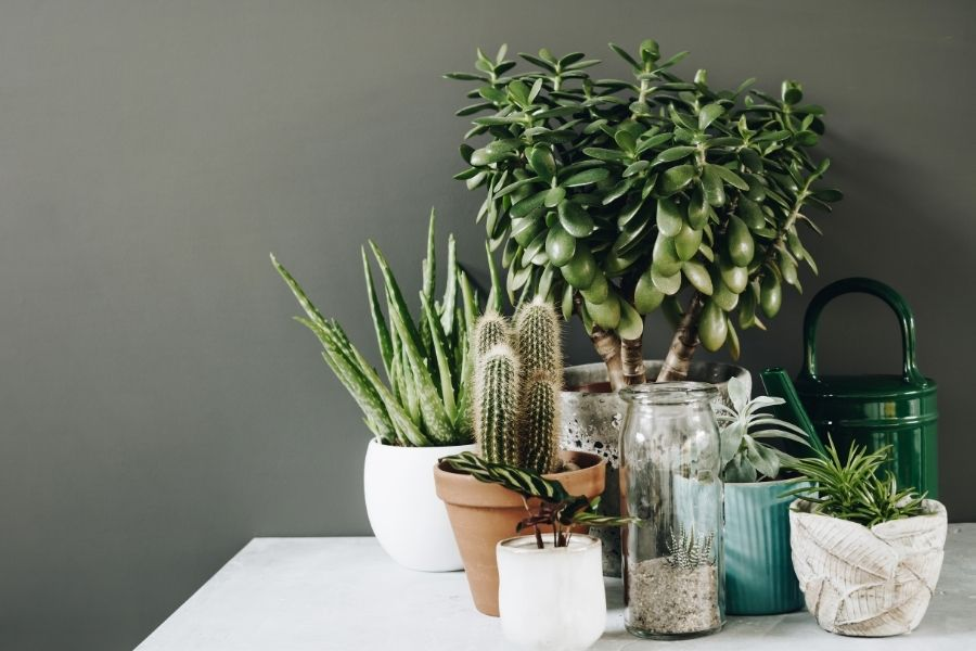 house-plants that like direct sunlight