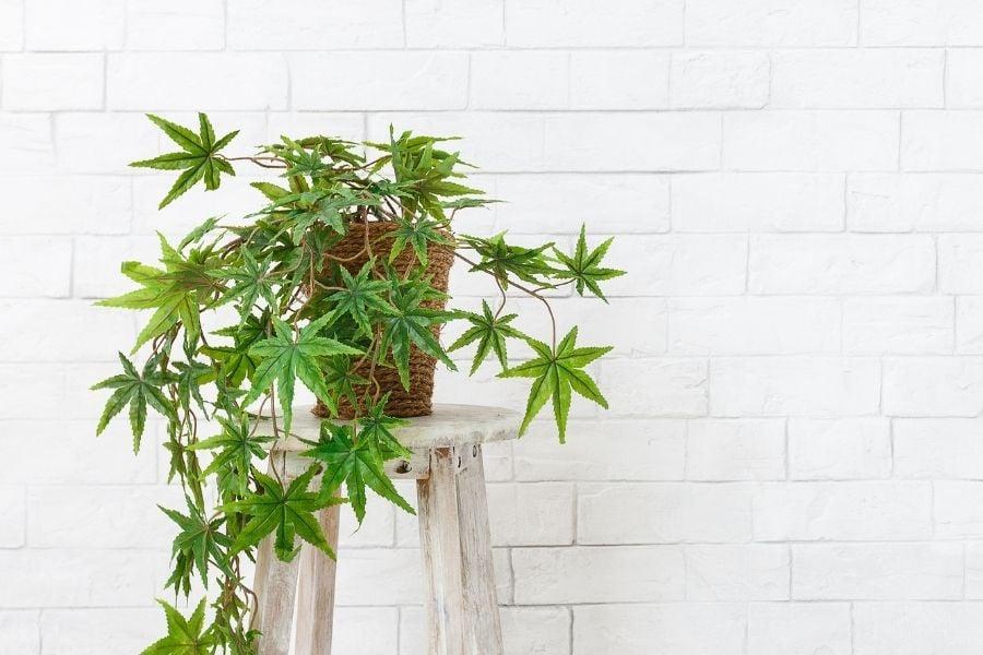 plants decoration living room