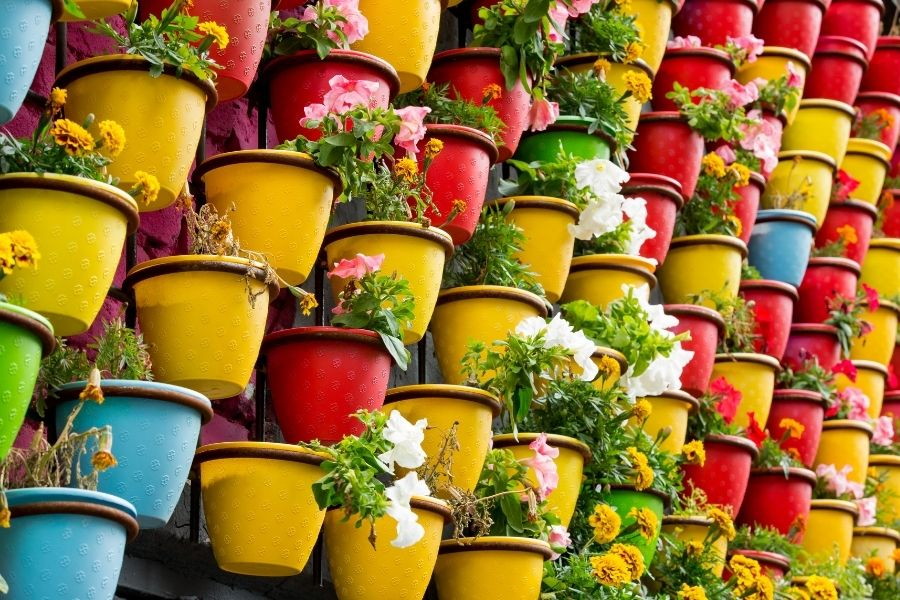 Background of Colorful flowers pots