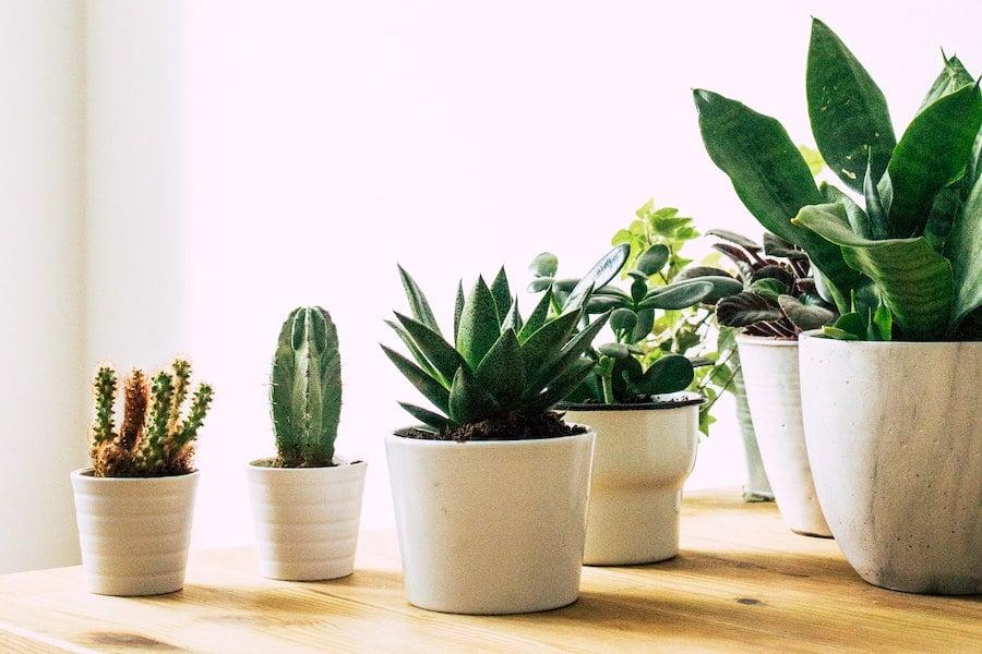 Various white planters style
