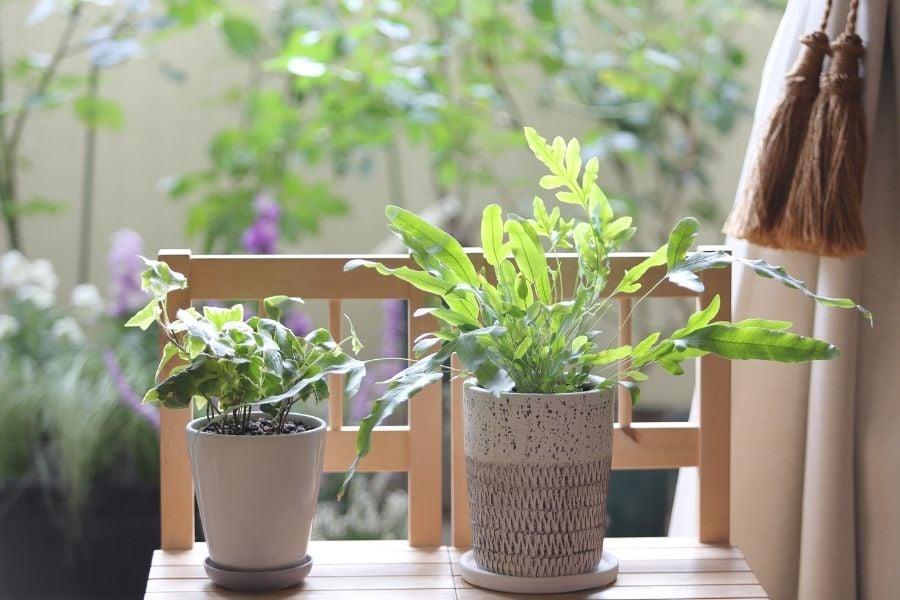 plants outdoor