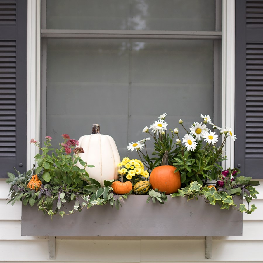fall window box with pumpkins