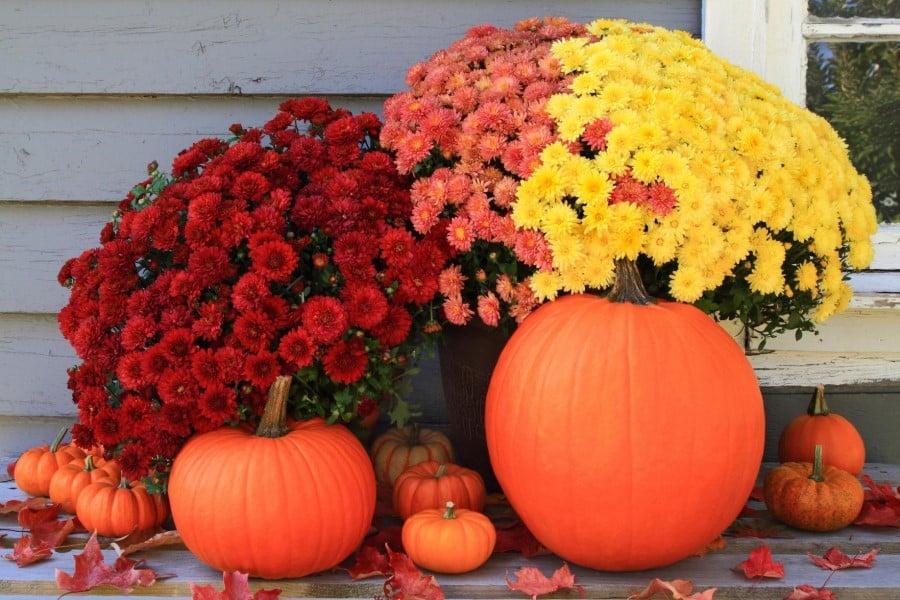 Perennials autumn decor
