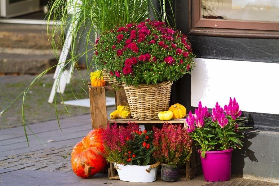 fall planter-ideas