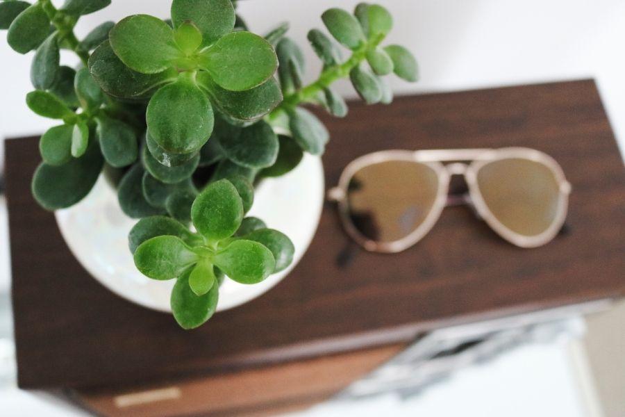 Jade plant on table