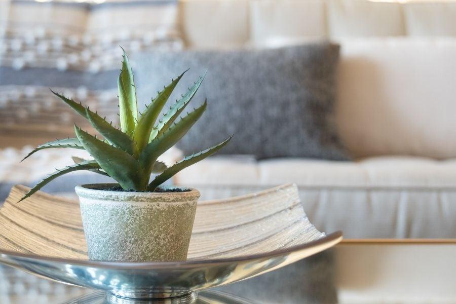 Aloe vera deco in bedroom